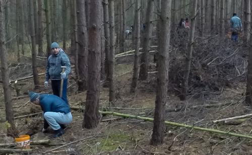 Baumpflanzung NABU Biesenthal 30.11.2014