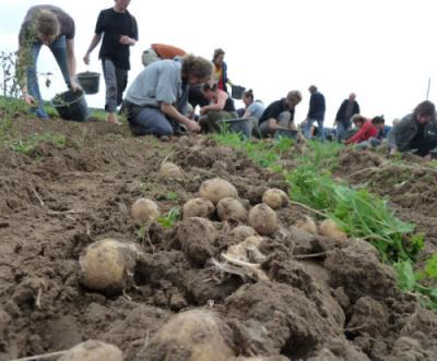 Kartoffelernte Karlshof 2011